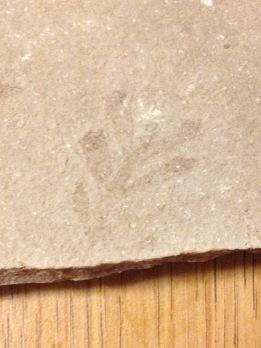 Split from Sandstone in Cliffside